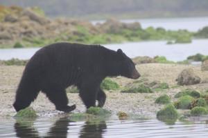 Bootstour mit Bären-Beobachtung im Kanada Urlaub