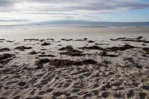 Die Küsten der Prince Edward Island-Atlantikprovinzen Kanada
