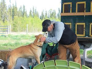 Husky auf Schlittenhunde Farm