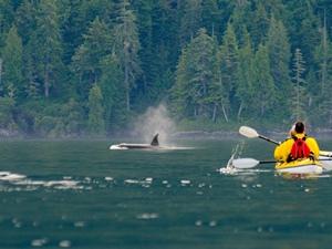Mit Orcas Kajaken - Credit: Darren Robinson