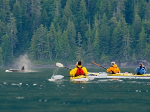 Westkanada Rundreisen Orca Camp Paddeln