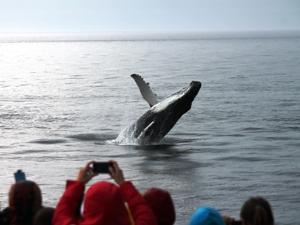Die Wale des St.-Lorenz-Strom bei Tadoussac | erlebe-kanada