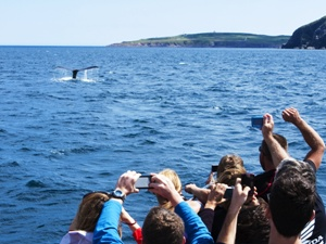 Whales Tail and Crowd