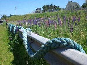 Stilleben auf Ihrer Erkundungstour über die Insel Prince Edward Island