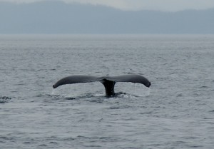 Port Rexton Whalewatching