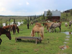 westkanada-cariboo-ranch-pferde