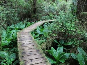 Rainforest Trail im Pacific Rim Nationalpark