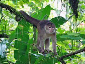 Affen klettern auf Bäumen im Dschungel