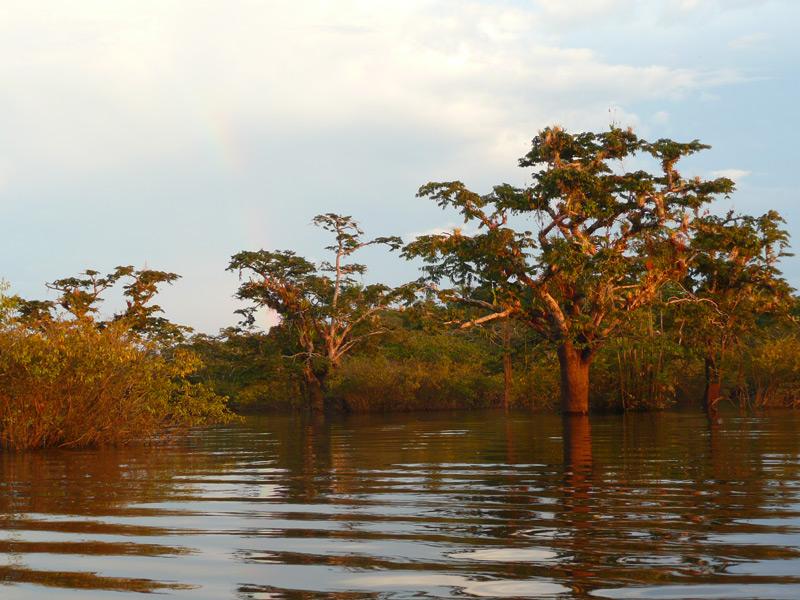 3 Wochen Ecuador Cuyabeno Dschungel