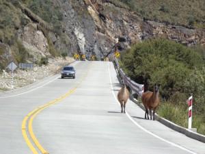 Fahrt durch den landschaftlich reizvollen El Cajas Nationalpark