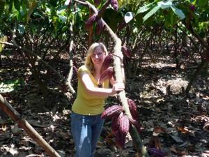Sehen Sie beim Besuch einer Kakaoplantage wie Kakao angebaut wird