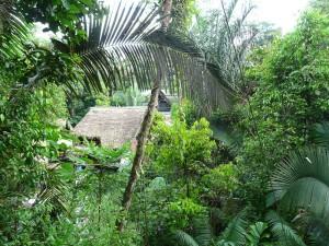 Dschungellodge im Cuyabenoreservat
