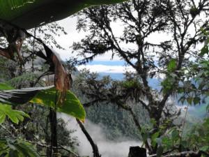 In 2 Wochen auch Ecuadors Nebelwald erkunden