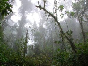 nebelwald-bellavista-ecuador
