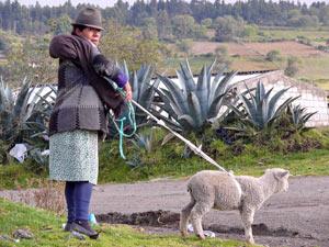 Schaf an der Leine