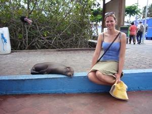Seelöwe am Hafen auf Santa Cruz