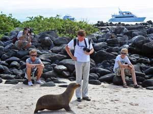 Neugieriger Seelöwe auf Galapagos
