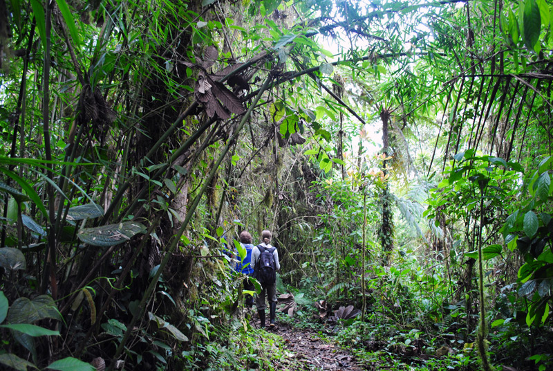 Wanderung im Nebelwald Ecuadors