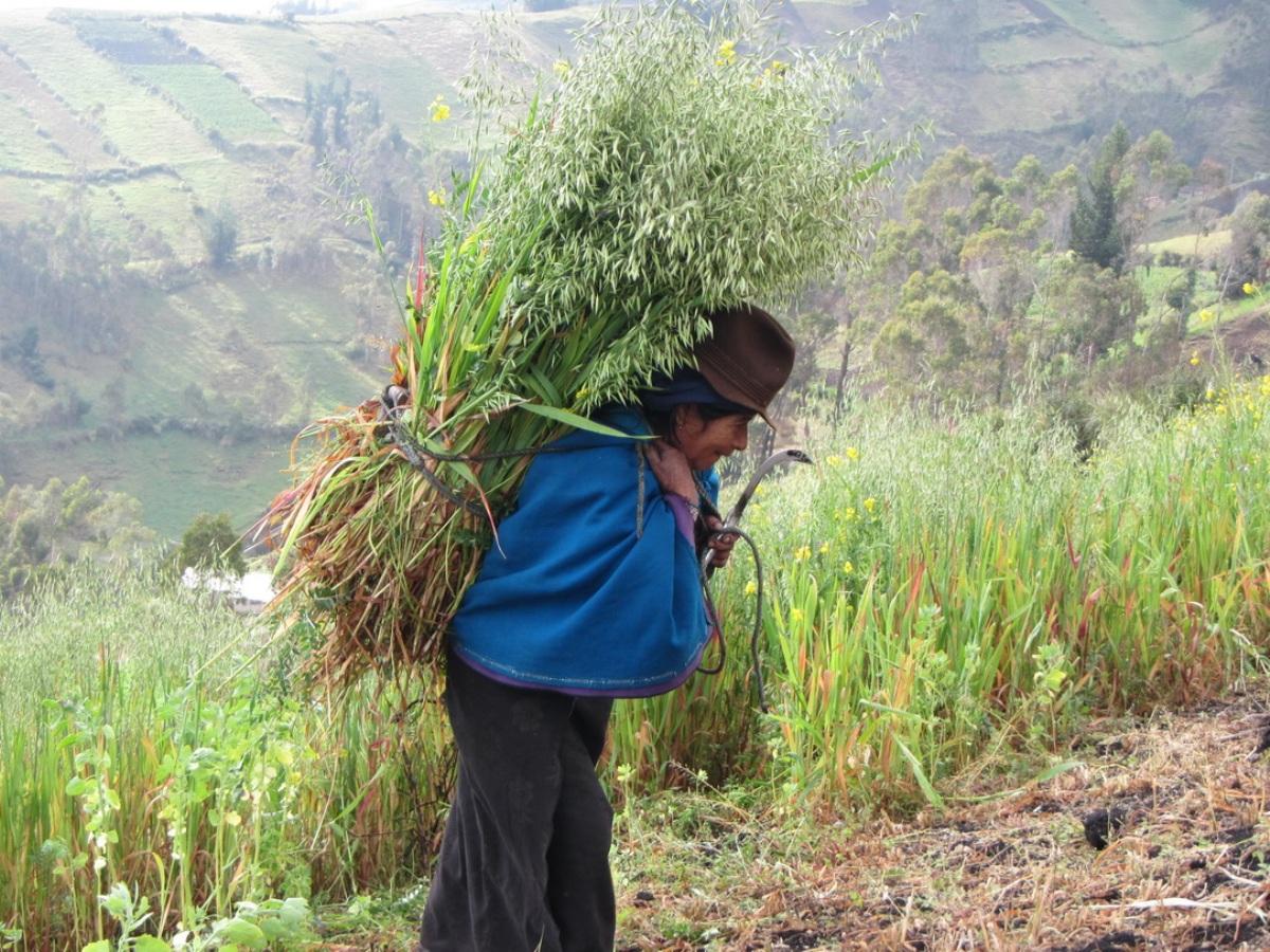 Frau trägt Getreidebündel auf dem Rücken