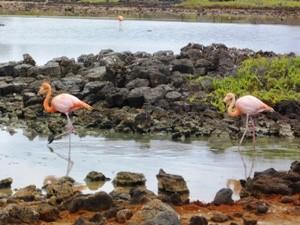 Flamingos-galapagos-inselhopping