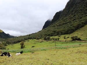 Grüne Umgebung Papallactas