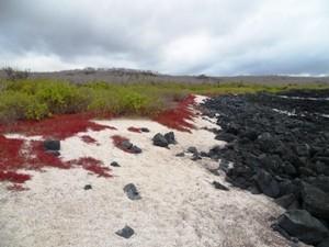 landschaft-galapagosinseln-floreana