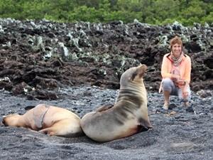 Seelöwen bewohnen die Galapagosinseln