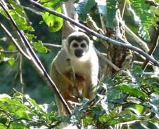 Dschungel-Abenteuer im Cuyabeno Naturreservat