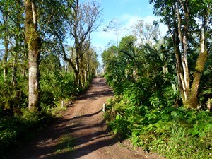 Das grüne Hochland der Galapagosinseln