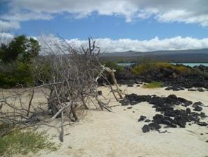 strand-galapagos-inselhopping