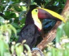 Tena – Ecuadors Tor zum Dschungel
