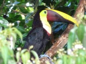 Auf Tiersuche im Dschungel Ecuadors