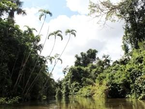 Vegetation im Amazonasgebiet