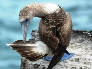 vogel-galapagos rundreise