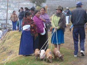 Indigene Frauen mit Ferkeln auf dem Tiermarkt