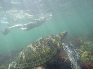 Schnorcheln mit Meeresschildkröte