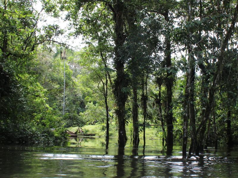 Fluss und Bäume im Dschungel Ecuadors
