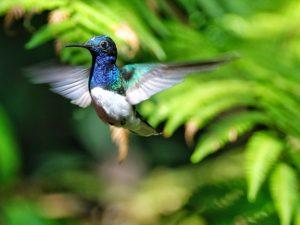 Auf Kolibrisuche im Nebelwald