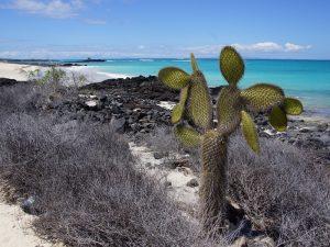 Kakteen und Felsen auf dem Strand Bachas