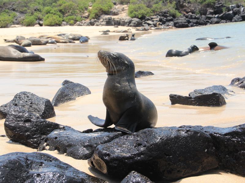 ecuador-galapagos-santafe-seeloewe