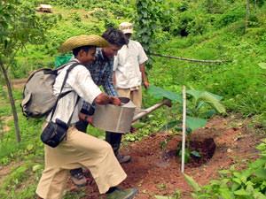 olifanten Kalaw: eigen boompje planten