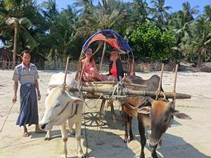 Vervoer Myanmar per ossenkar