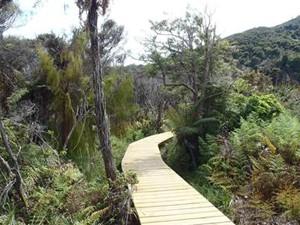 Steg durch die Landschaft des Abel Tasman Coast Tracks © Cab Roe