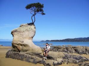 Neuseeland-abel-tasman-baum-pause