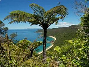 Neuseeland-abel-tasman-blick-stran