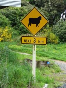 Schafe werden Ihren Weg kreuzen