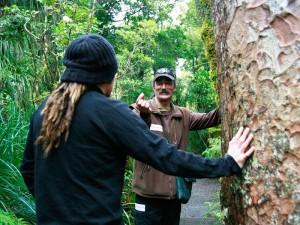 Kauri Tree © James Heremaia - Waipoua Forest