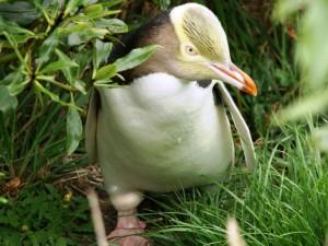 Die Tierwelt der Otago-Halbinsel