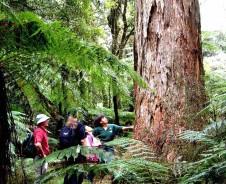 Rotorua – Den Maori auf der Spur