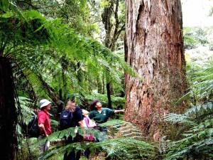 Bei Neuseelandreisen Natur pur erleben